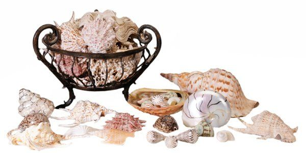 1191: Large Group Assorted Sea Shells