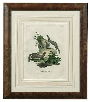 Alessandri animal engravings