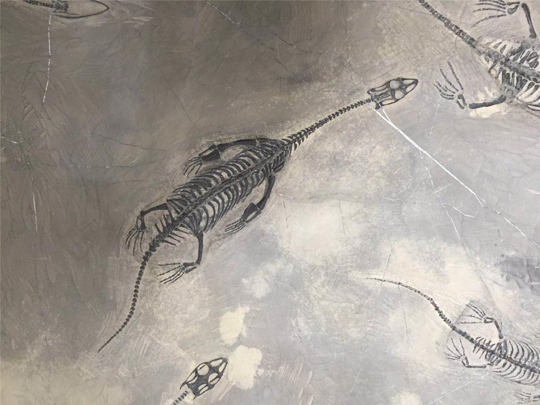 A Fossil Of GuiZhou 'Dragon' - 4