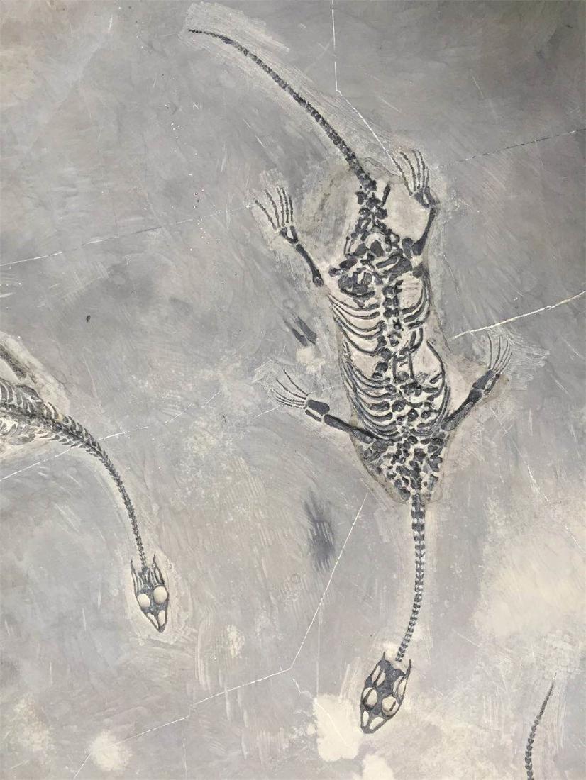 A Fossil Of GuiZhou 'Dragon' - 5