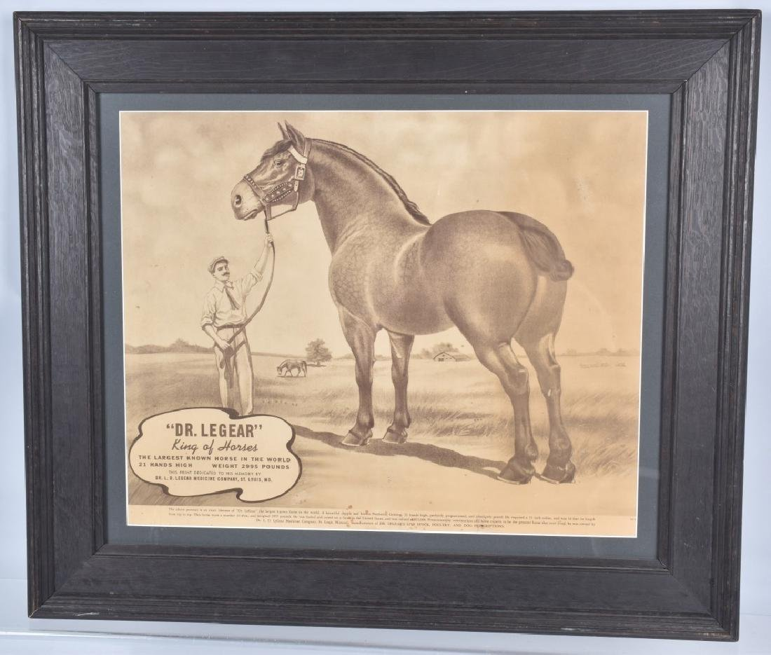 DR LEGEAR KING OF HORSES PRINT