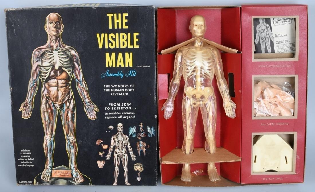 RENWAL THE VISIBLE MAN KIT w/ BOX
