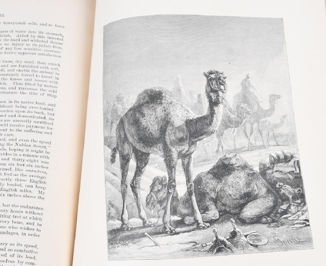 1885 ANIMATE CREATION By REV JG WOOD ZOOLOGY - 11