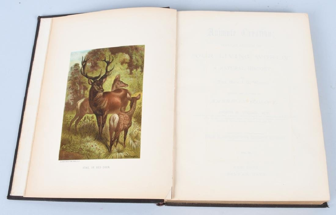 1885 ANIMATE CREATION By REV JG WOOD ZOOLOGY - 2