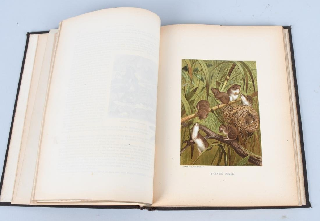 1885 ANIMATE CREATION By REV JG WOOD ZOOLOGY - 4