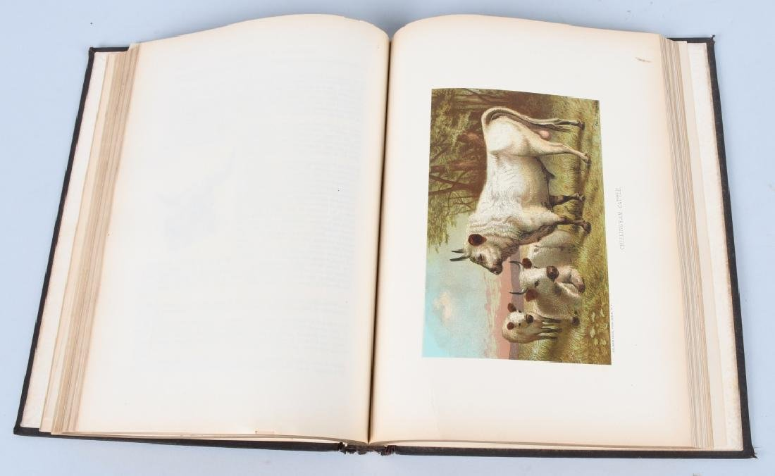 1885 ANIMATE CREATION By REV JG WOOD ZOOLOGY - 5