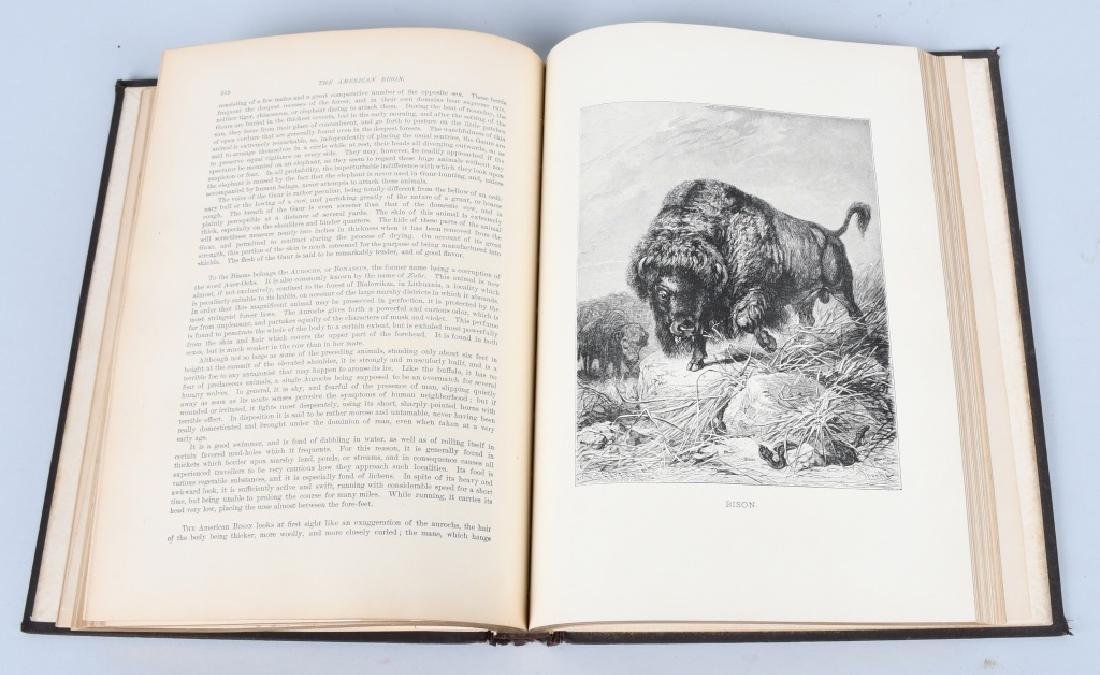 1885 ANIMATE CREATION By REV JG WOOD ZOOLOGY - 6