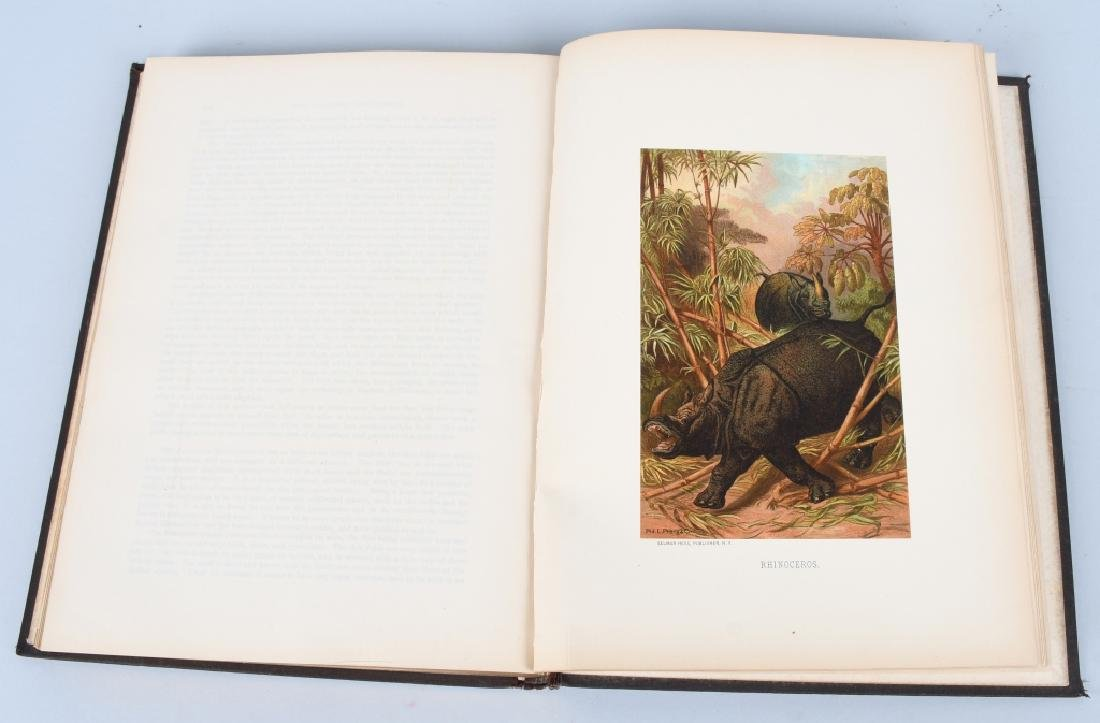 1885 ANIMATE CREATION By REV JG WOOD ZOOLOGY - 9