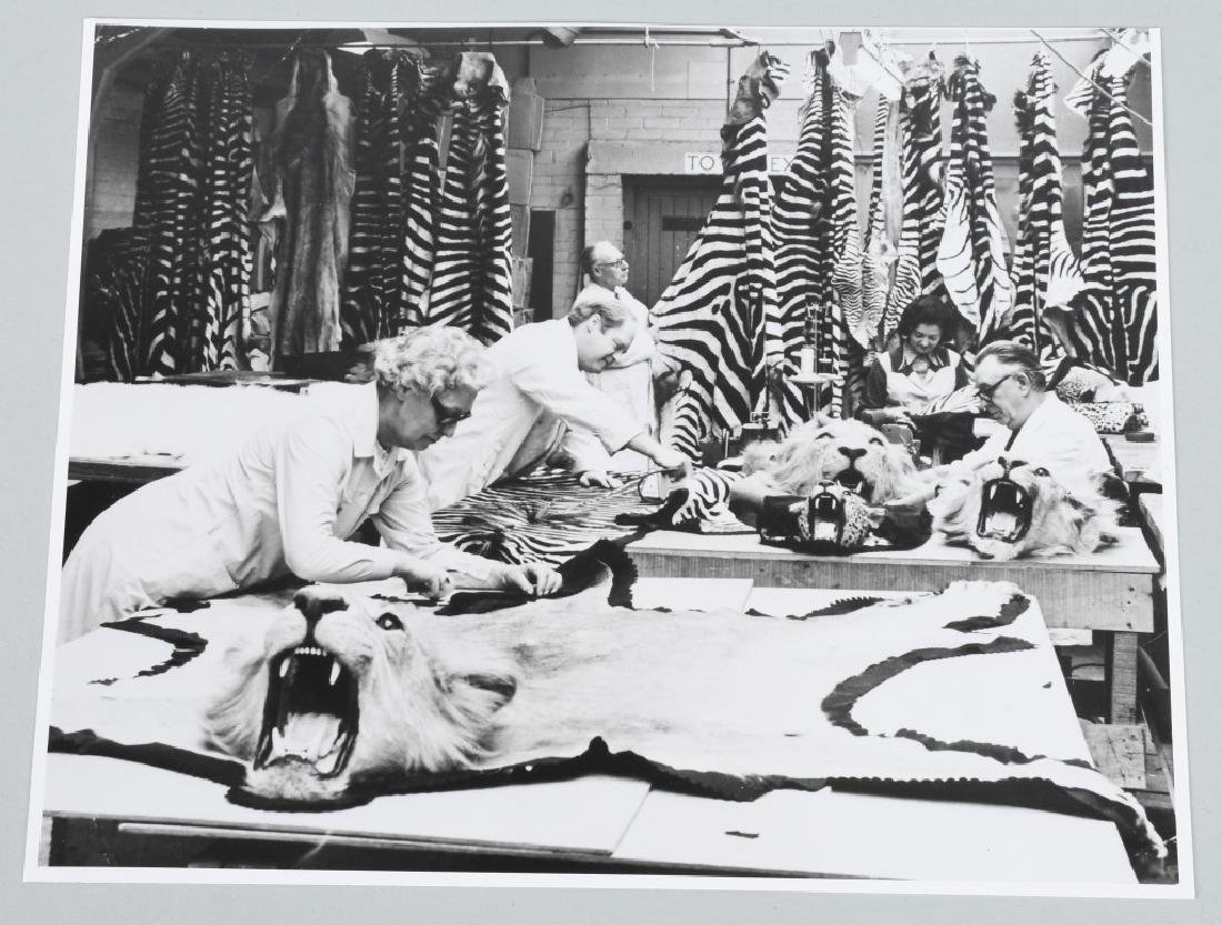 3-ROWLAND WARD TAXIDERMY PHOTOS - 3