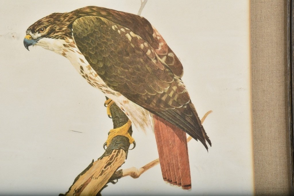 TOM DUNNINGTON SIGNED RED TAILED HAWK PRINT - 2