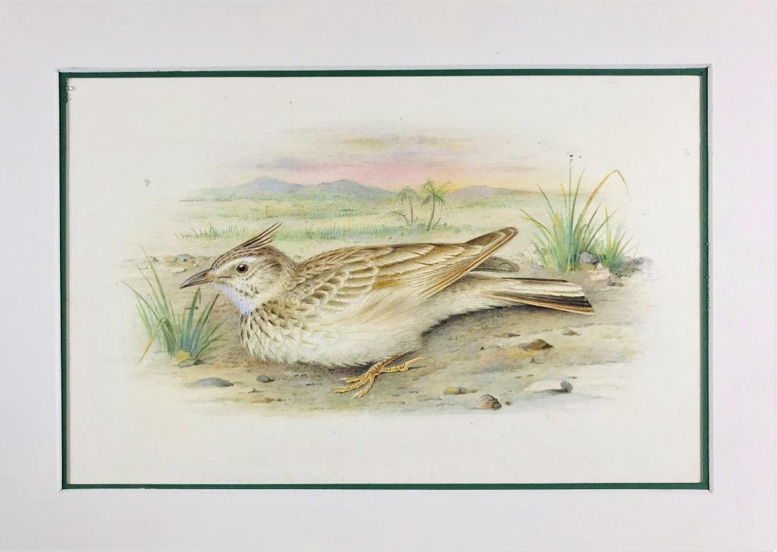 GRONVOLD.  lot of 4 watercolors. - 4