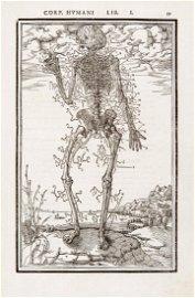 Surgery. ESTIENNE. De dissectione partium corporis...