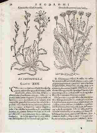 Botany. BAUHIN.  Pinax Theatri Botanici.