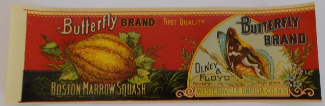 Very Rare Early Butterfly Brand Boston Marrow Squash
