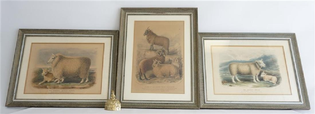 3 BRITISH SHEEP c. 1842 HAND COLORED LITHOS - 6