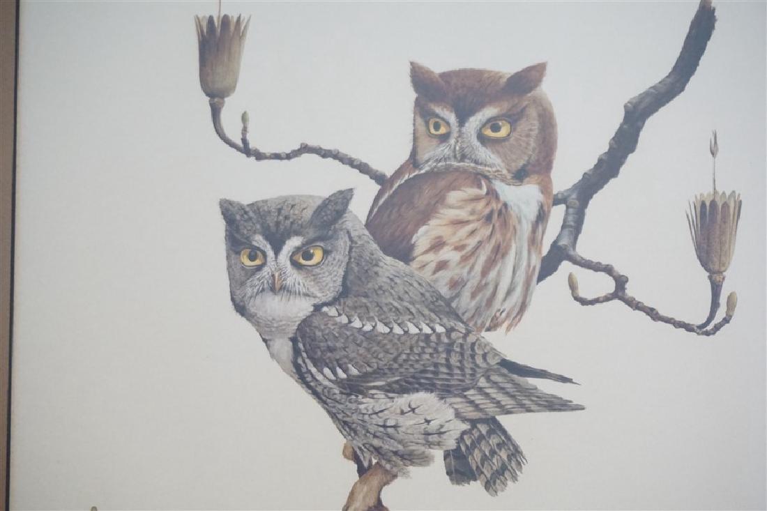 RAY HARM SCREECH OWL SIGNED LITHO - 5