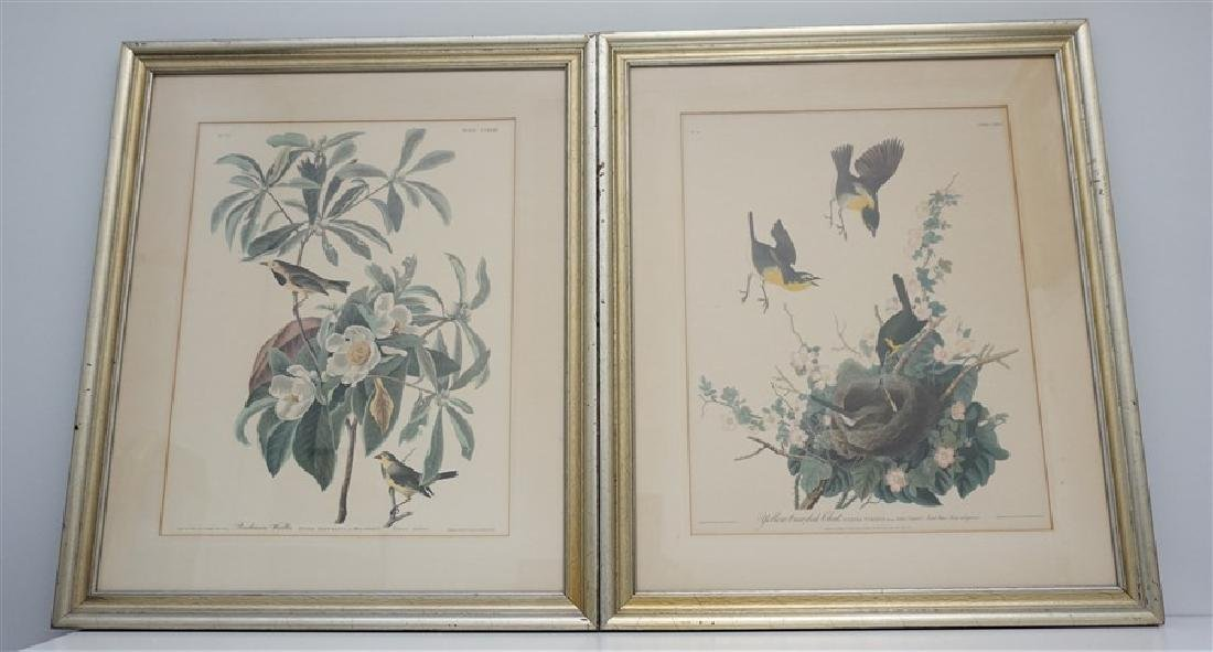 PAIR VINTAGE AUDUBON REPRINT YELLOW BREASTED CHAT