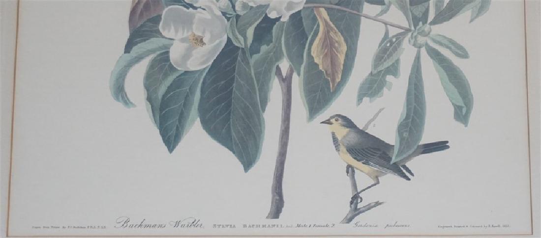 PAIR VINTAGE AUDUBON REPRINT YELLOW BREASTED CHAT - 4