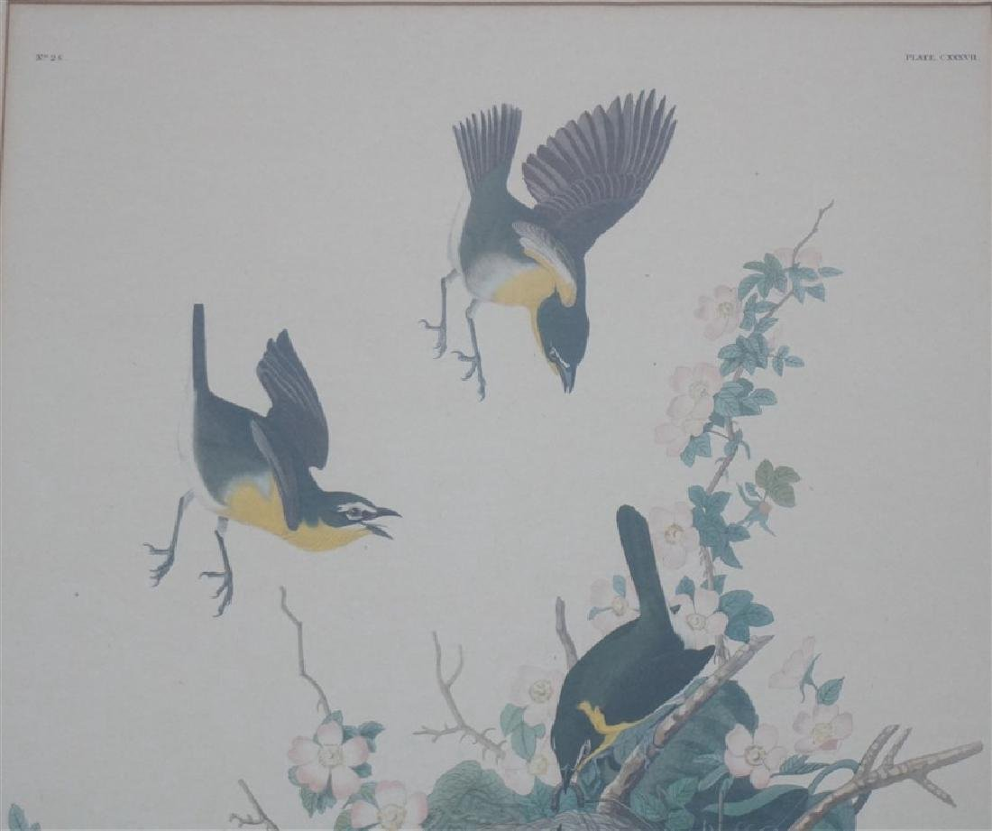 PAIR VINTAGE AUDUBON REPRINT YELLOW BREASTED CHAT - 6