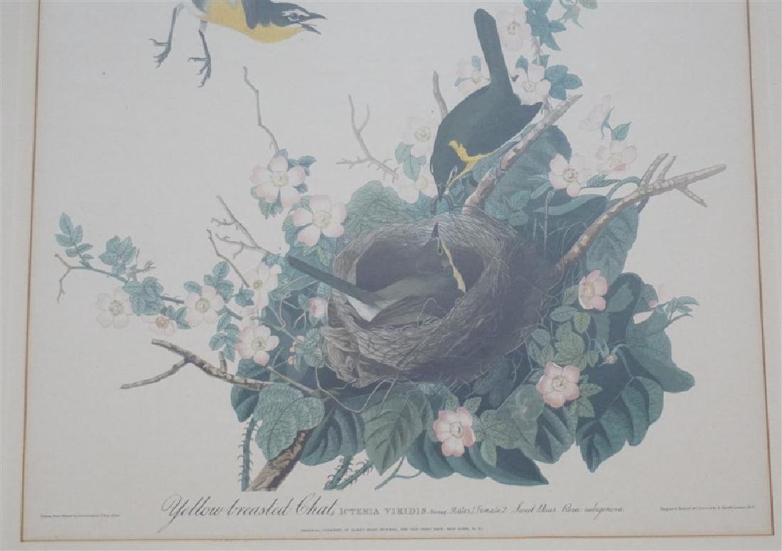 PAIR VINTAGE AUDUBON REPRINT YELLOW BREASTED CHAT - 7