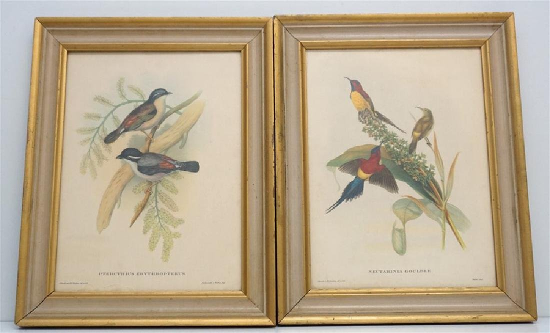 2 JOHN GOULD HAND COLORED LITHOGRAPHS