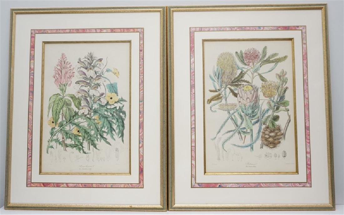 2 1849 ELIZABETH TWINING HAND COLORED LITHOS