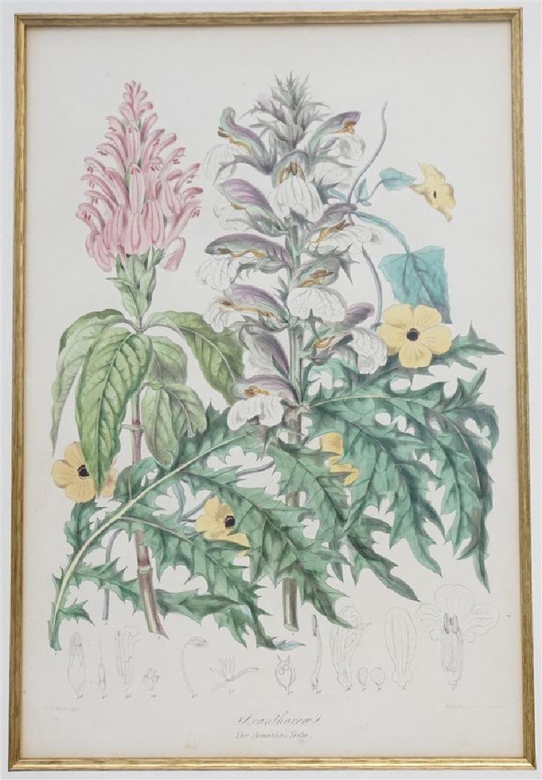 2 1849 ELIZABETH TWINING HAND COLORED LITHOS - 2