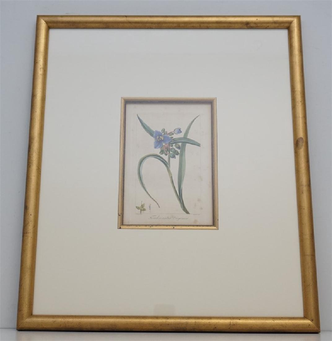 PANCRACE BESSA 1836 HAND COLORED ENGRAVING