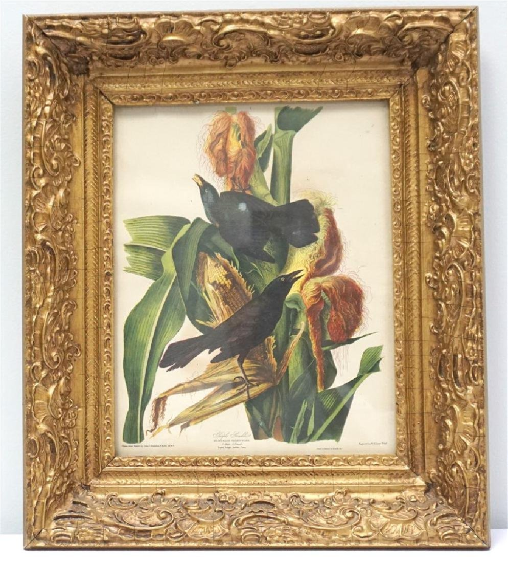 LIZARS AUDUBON BIRD PRINT IN GILT FRAME