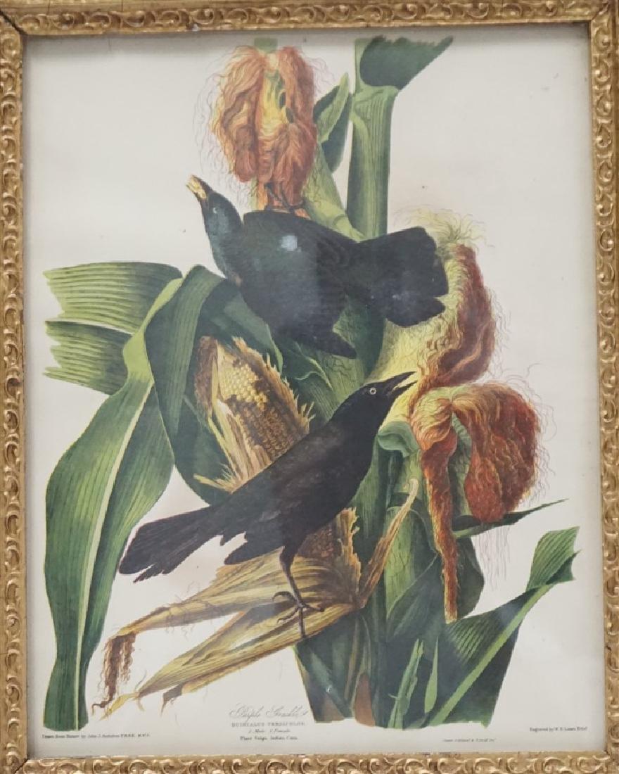 LIZARS AUDUBON BIRD PRINT IN GILT FRAME - 2