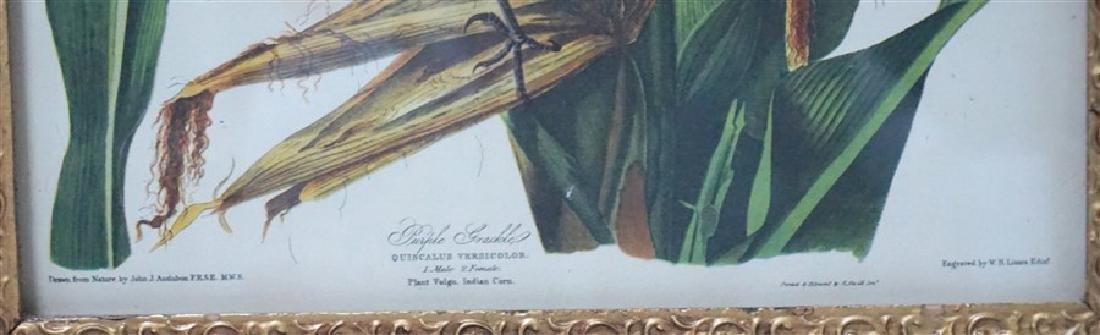 LIZARS AUDUBON BIRD PRINT IN GILT FRAME - 3