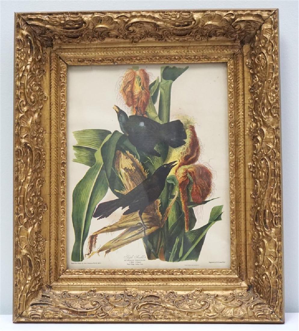 LIZARS AUDUBON BIRD PRINT IN GILT FRAME - 4
