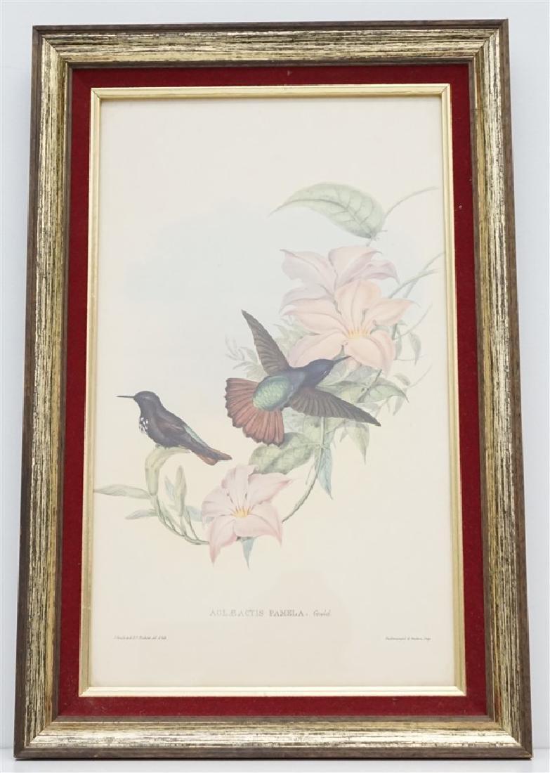 FRAMED GOULD HUMMINGBIRD PRINT