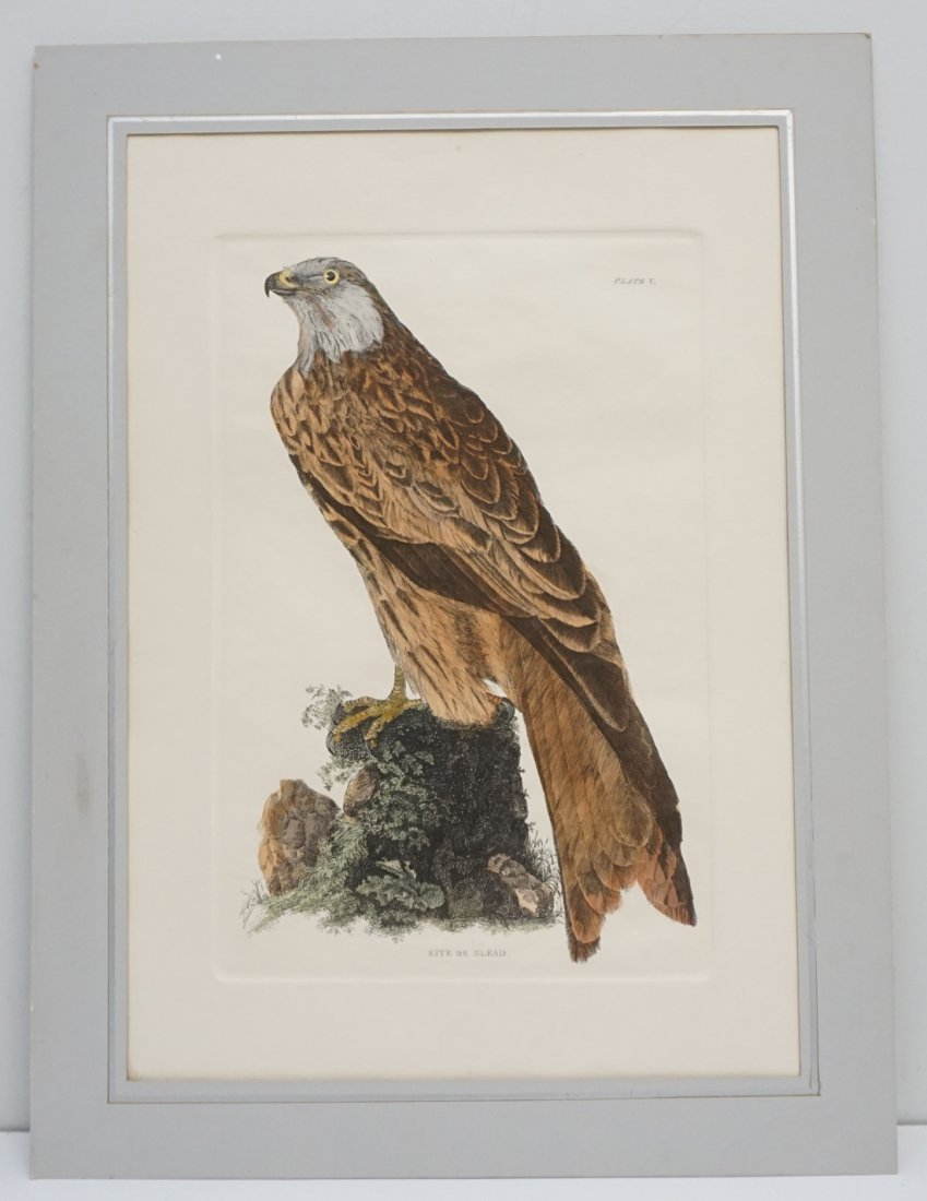 JOHN SELBY HAND COLORED ENGRAVING