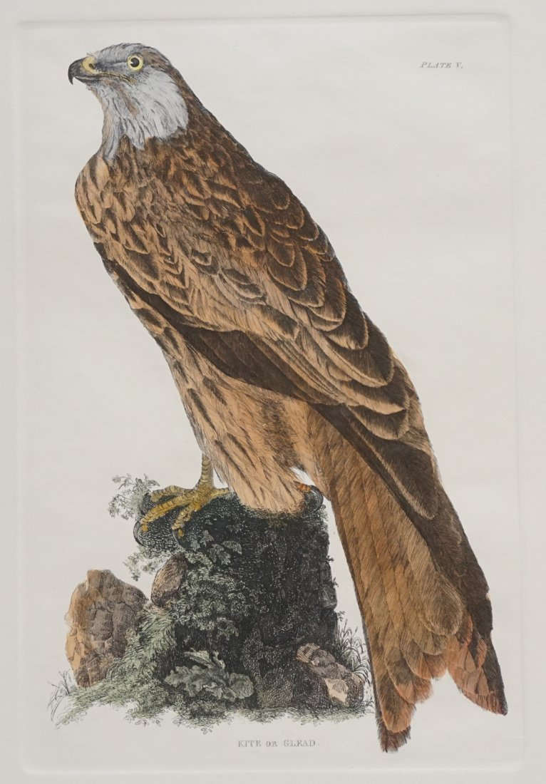 JOHN SELBY HAND COLORED ENGRAVING - 2