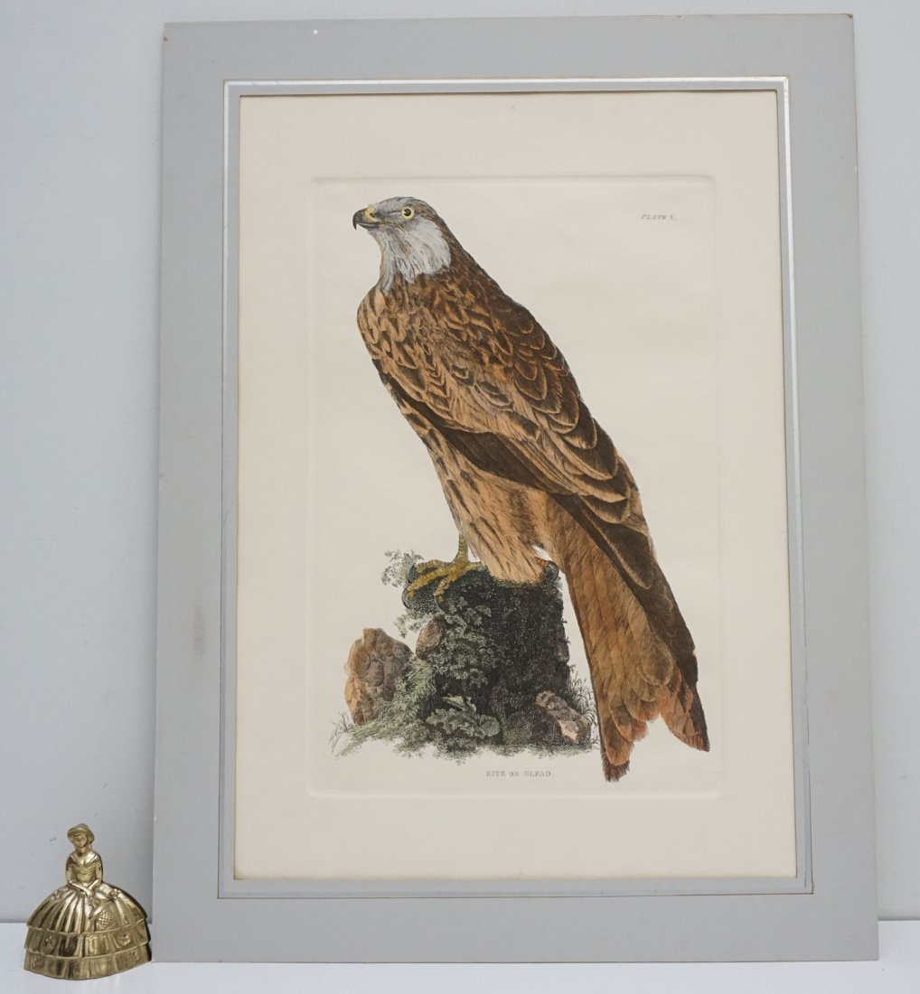 JOHN SELBY HAND COLORED ENGRAVING - 7