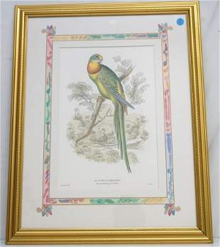 HAND COLORED ENGRAVING PARAKEET - LEAR