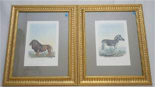 PAIR HAND COLORED GEORGES CUVIER LITHOS