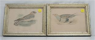 2 BORGHESE HAND COLORED BIRD PRINTS