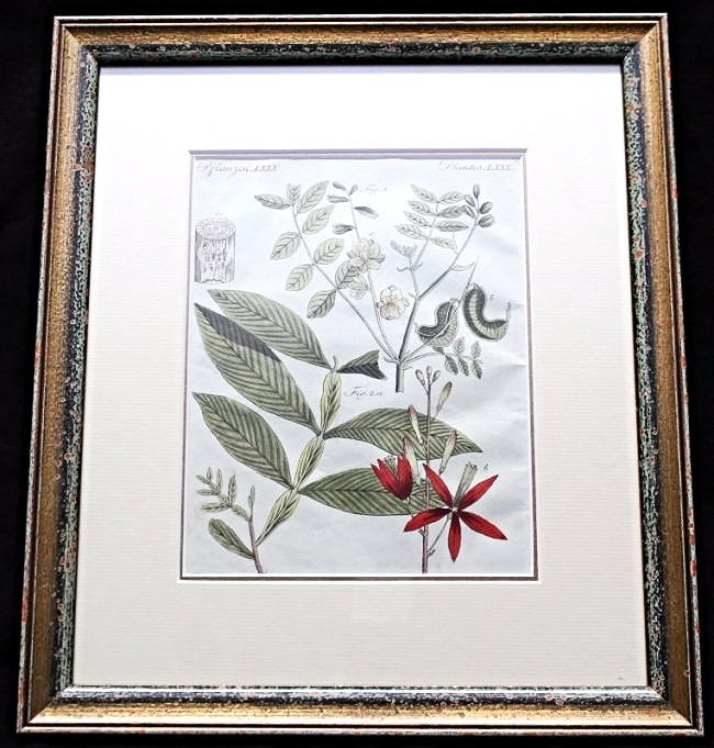 HAND COLORED 19TH c. BOTANICAL ENGRAVING