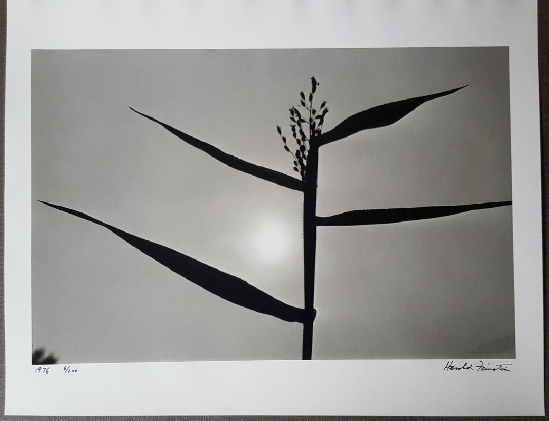 Harold Feinstein Vintage Signed Photograph 1976