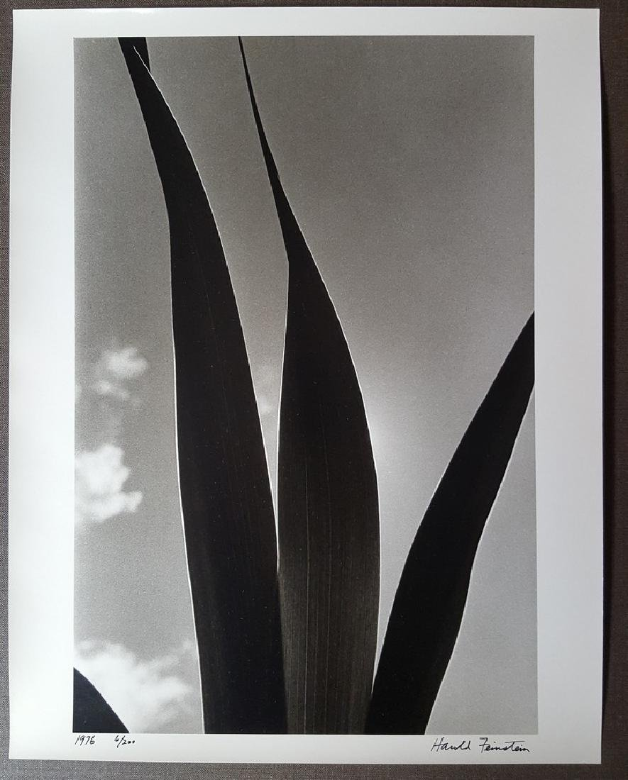 Harold Feinstein Vintage Signed Photograph 1976