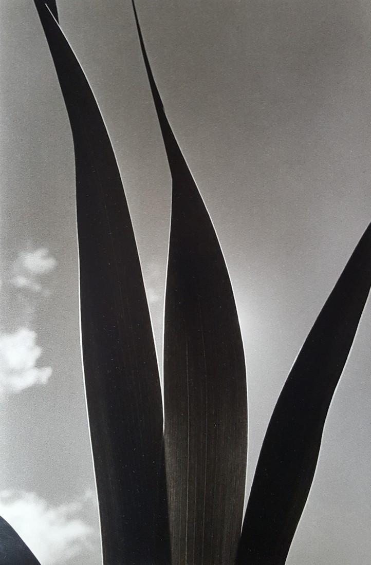Harold Feinstein Vintage Signed Photograph 1976 - 2