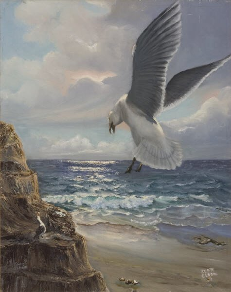 20: Scott's ' Nesting Gulls'