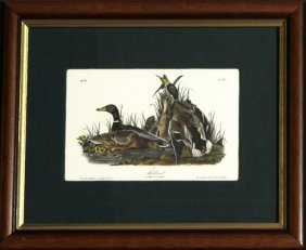 "John James Audubon (1785-1851), ""mallard,"" No. 77,"
