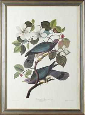 "John James Audubon (1785-1851), ""band-tailed Pigeon,"""