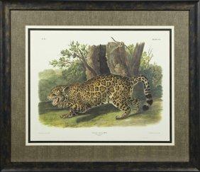 """John James Audubon (1785-1851), """"the Jaguar-female,"""""""