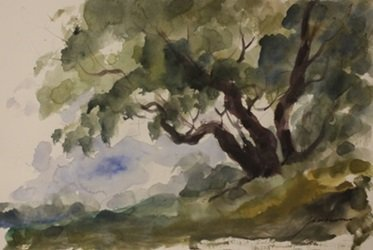 "Original Watercolor on Paper ""Shade at a Slant"" by"