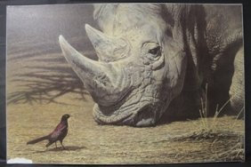 "Giclee On Canvas ""rhinoceros"" After Alan M. Hunt"