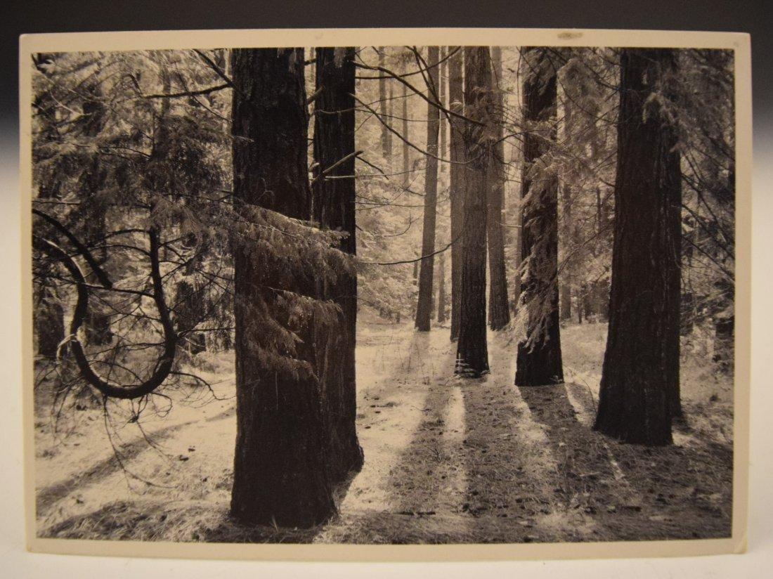 Ansel Adams Postcard - 2